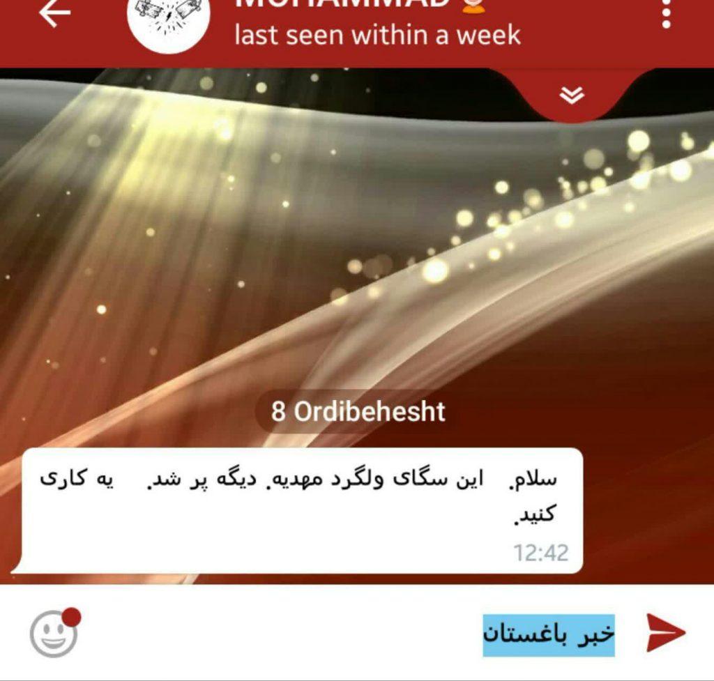 صدای شهروندان باغستان-معضل سگ های ولگرد در مهدیه و سایر محلات باغستان