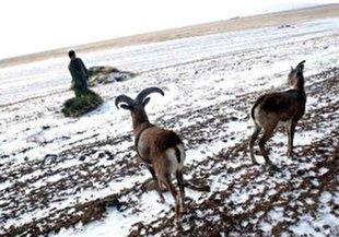 زمستان فصل پر خطر حیات وحش؛مراقب آنان باشیم