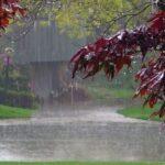 بارش پراکنده باران در بخش هایی از کشور ادامه دارد