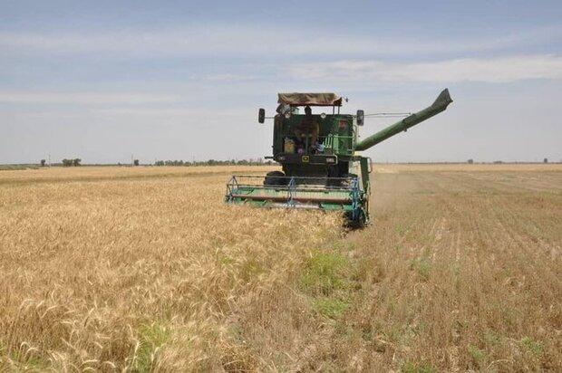 ۱ میلیون و ۸۰۰ هزار تن گندم از کشاورزان خرید شد