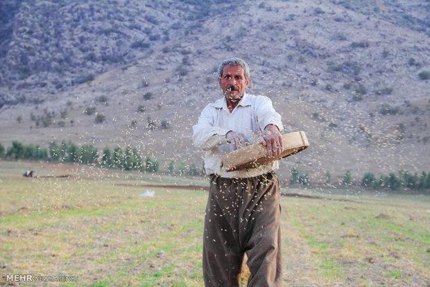 برنامهریزی برای تأمین بذر کشاورزان اردبیل در شرایط خشکسالی