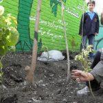 اجرای طرح هر مدرسه یک نهالستان در هفته منابع طبیعی
